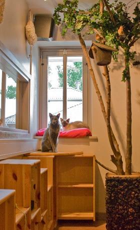 positionering katnapolsky