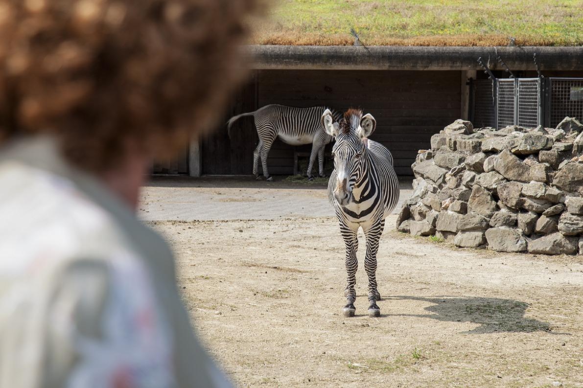 content GS1 zebra